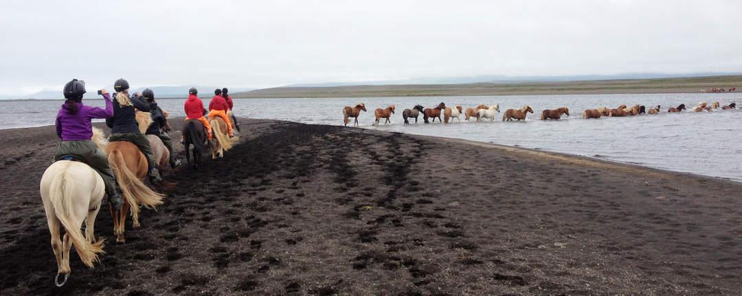 Ryttare som driver en flock islandshästar över älven Víðidalsás