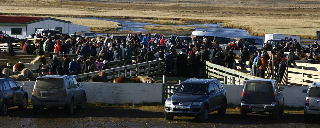 Islandshästarna insamlade i Skrapatungurétt inför vinter
