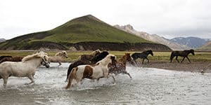 ridresor island - landmannalaugar