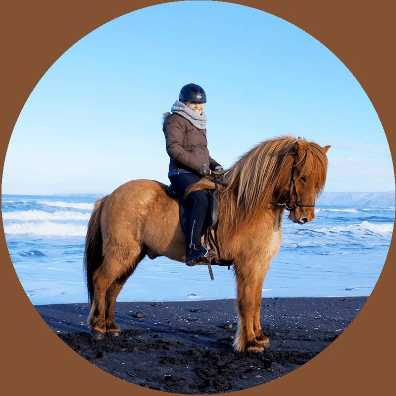 Ridresor vinter på Island