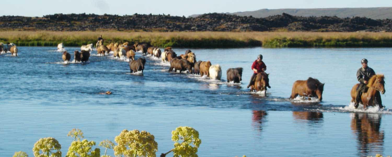 Rider på islandshästar över älven Laxá