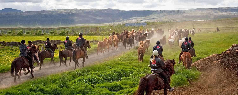 Rider islandshästar på det isländska höglandet