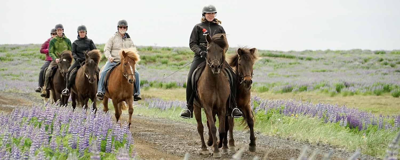 Rider längs fina ridstigar och över gröna ängar på Island