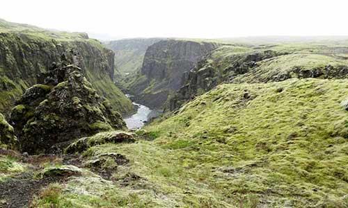 Grönvuxen ravin på Island