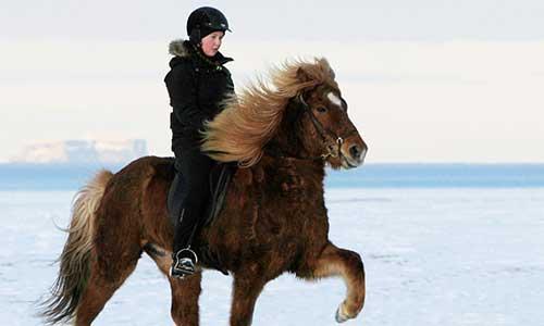 Rider tölt på vacker islandshäst med vinterpäls