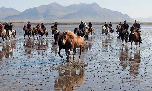 Rider islandshäst vid ebb på Island