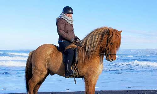 Vacker islandshäst i vinterskrudd