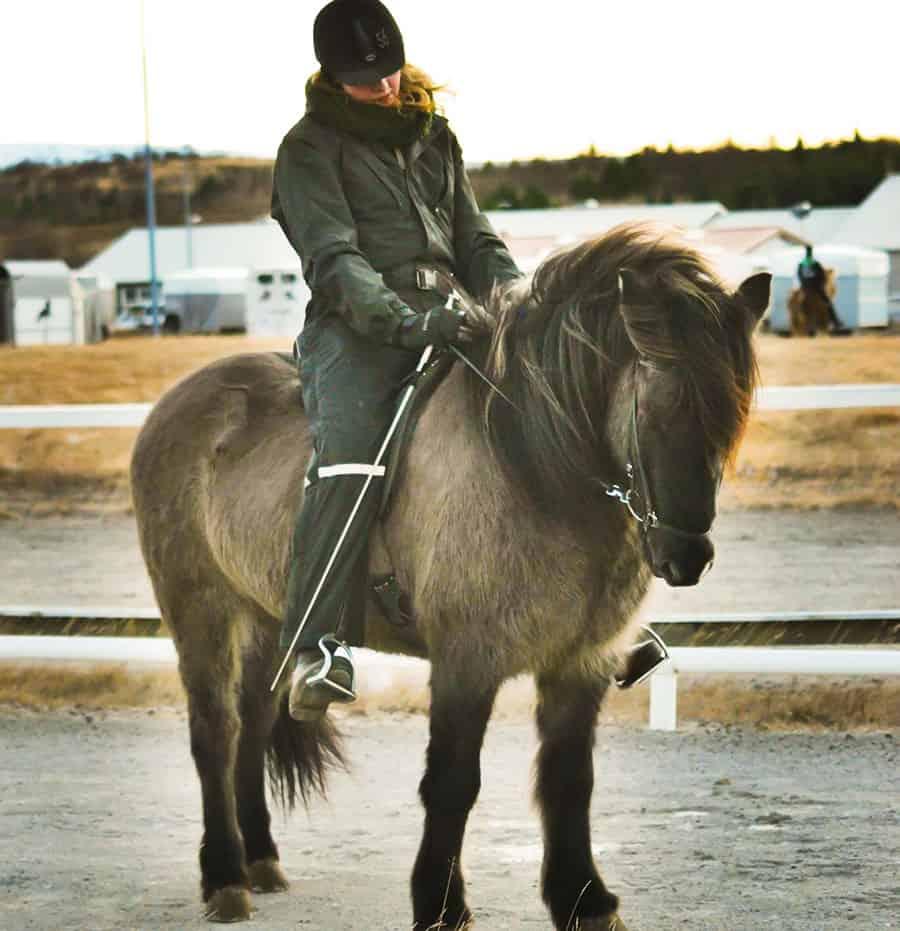 uppsittning och ridning på islandshäst
