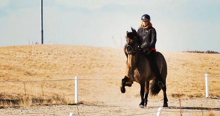 van ryttare rider islandshäst i tölt