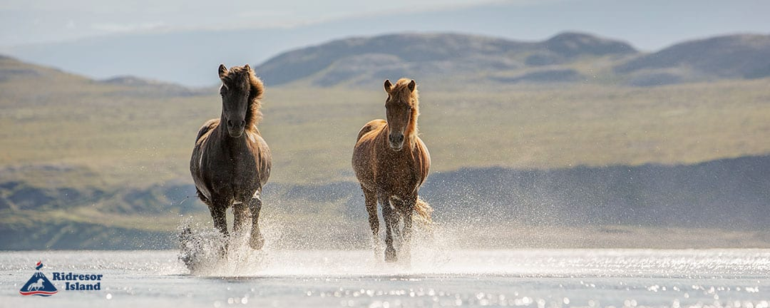 islandshästar strand Snæfellsnes ridresa Island