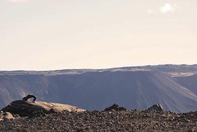 Helgafell det heliga berget en sevärdhet på Island