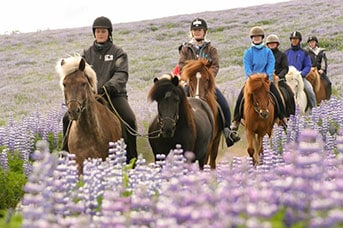Naturreservatet Heiðmörk sevärdhet på Island