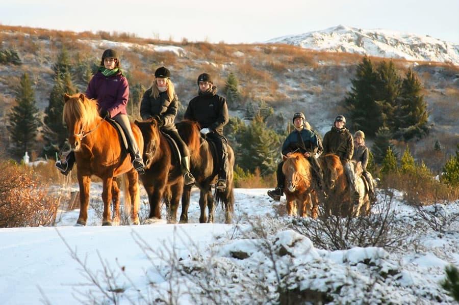 rider islandshäst på vintern i naturreservatet heiðmörk