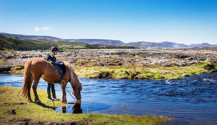 ridpaus i Naturreservatet Heiðmörk på Island